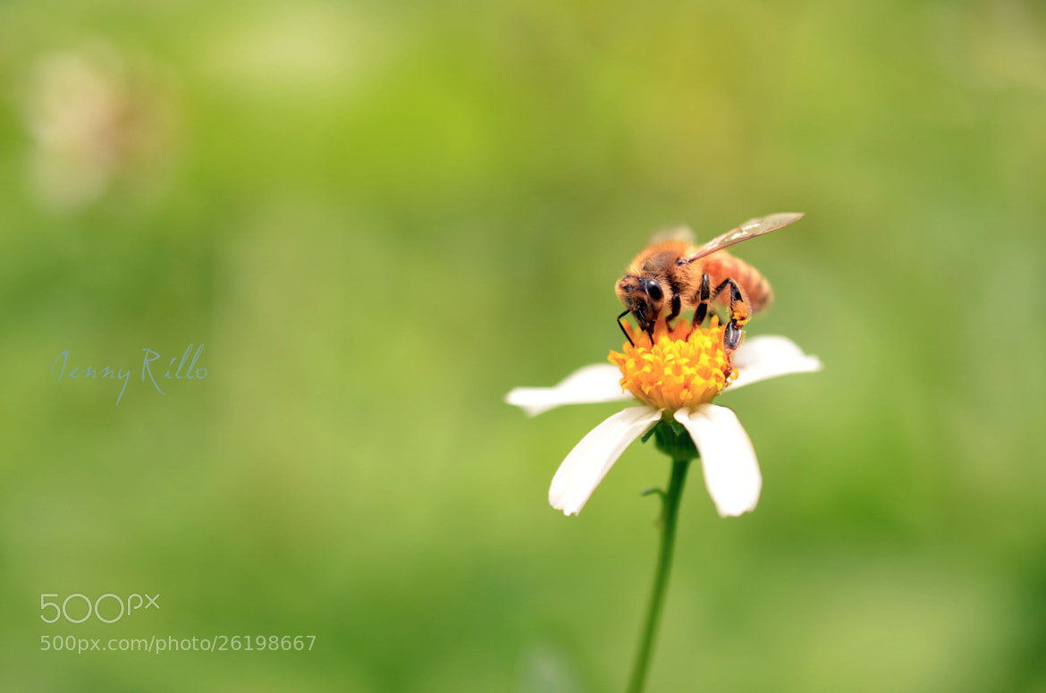Photograph The Secret Life Of Bees by Jenny Rillo on 500px