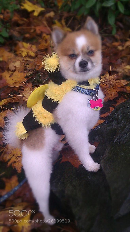 Photograph Lorenzo Simoncelli~ My Pup by Deana Lamb on 500px
