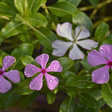 Love is the flower, Nikon D3200, AF-S DX Zoom-Nikkor 18-55mm f/3.5-5.6G ED II
