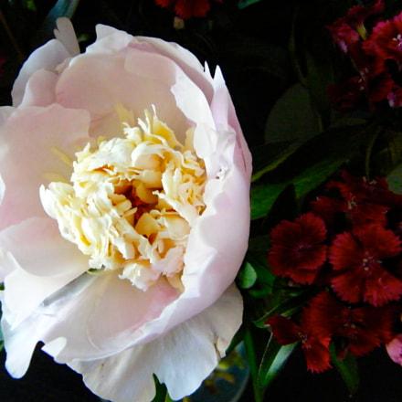 Flower in blossom, Fujifilm FinePix S8000fd