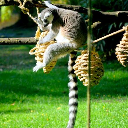 Zoo de Beauval 2, Nikon D5100, AF-S DX VR Zoom-Nikkor 55-200mm f/4-5.6G IF-ED