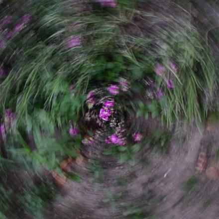 Untitled, Nikon D5200, AF-S DX Nikkor 18-55mm f/3.5-5.6G VR II