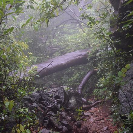 Forest Routes, Nikon D5300, AF-S DX Nikkor 18-140mm f/3.5-5.6G ED VR