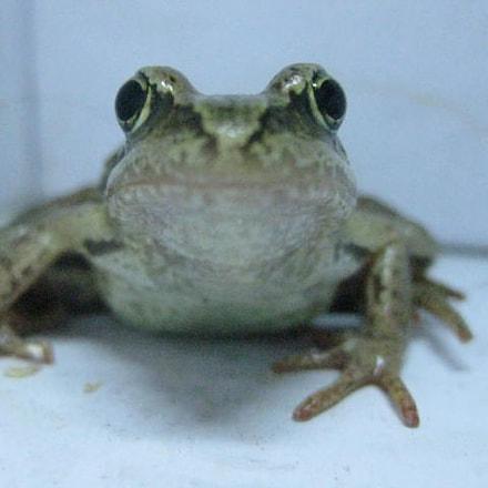 Frog, Canon DIGITAL IXUS 80 IS