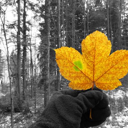 Maple Leaf., Canon POWERSHOT SX720 HS