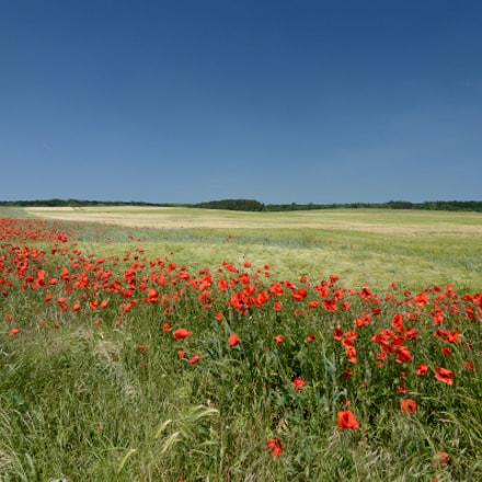 colors of the summer, Nikon D7000, Tokina AT-X 124 AF PRO DX (AF 12-24mm f/4)