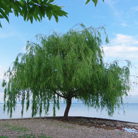 tree, RICOH PENTAX K-3 II, smc PENTAX-DA 18-135mm F3.5-5.6 ED AL [IF] DC WR