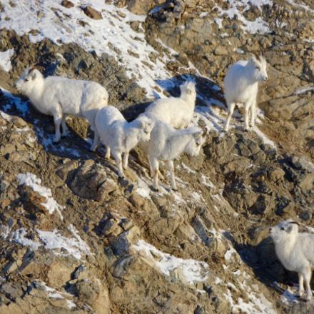 Alaska Wildlife, Sony DSC-W690
