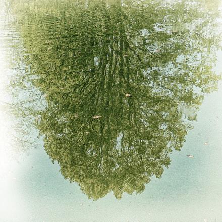 reflection in water, Panasonic DMC-FZ7