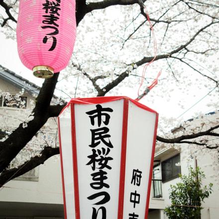 Tokyo Blossoms, 2009, Canon POWERSHOT G9
