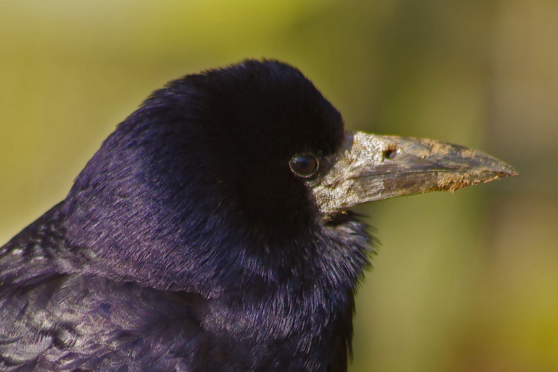 Photograph The Crow by Lee Ashman on 500px