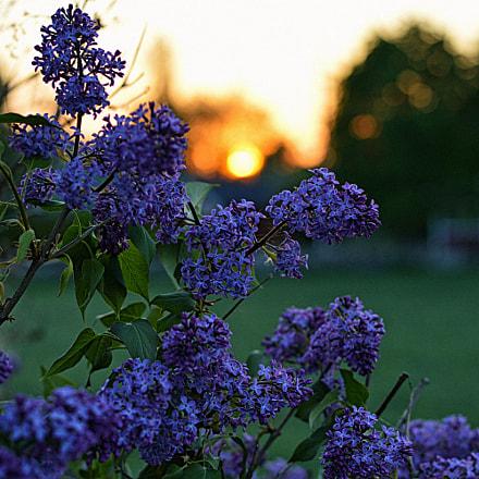 Sommernight, Nikon D3200, AF-S Nikkor 50mm f/1.8G