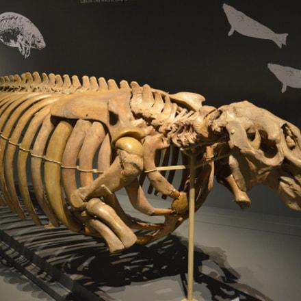 Dinosaur, Nikon D5100, AF-S DX VR Zoom-Nikkor 18-105mm f/3.5-5.6G ED