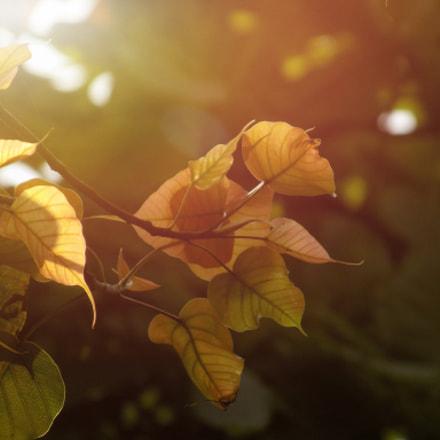 Untitled, Nikon COOLPIX L340