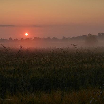 A misty dawn..., Nikon D5100, AF-S DX VR Zoom-Nikkor 18-55mm f/3.5-5.6G