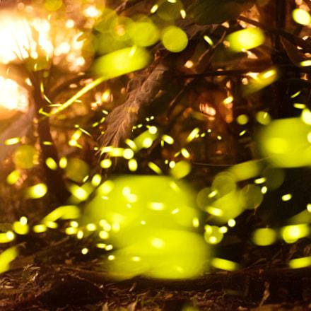 Firefly, Nikon D750, Tamron SP AF 90mm f/2.8 Di Macro 1:1 (272NII)