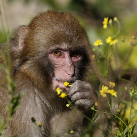 Flower and Child Monkey, Canon EOS-1D X MARK II, Canon EF 100-400mm f/4.5-5.6L IS II USM