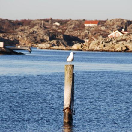 Seagull taking a sunbath, Nikon D80, Tamron AF 18-200mm f/3.5-6.3 XR Di II LD Aspherical (IF) Macro (A14)