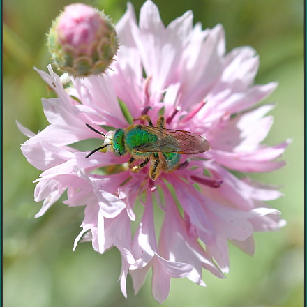 Green on Pink, Nikon D850