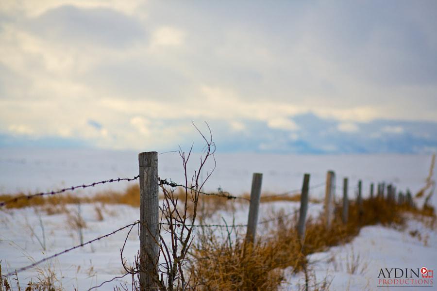Farm Fence roadside