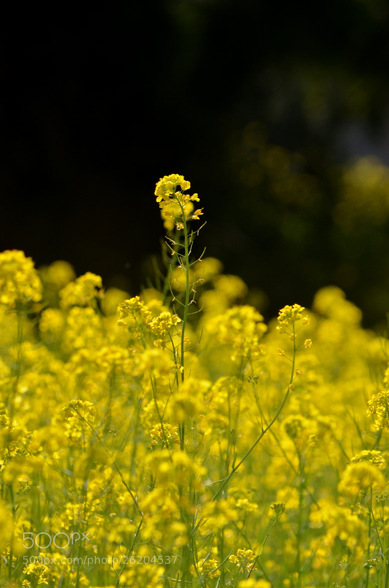 Photograph Early spring flowers by Senthil Balakrishnan on 500px