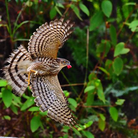 Fly, Nikon D5