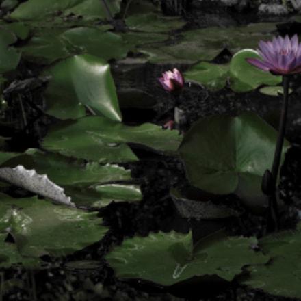 Monet, Canon POWERSHOT G16