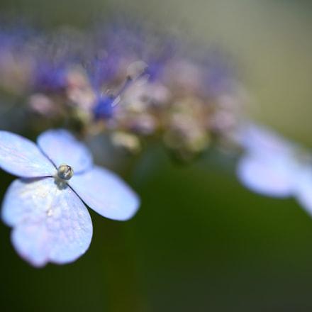 June ***, Nikon D750, AF-S Micro Nikkor 60mm f/2.8G ED