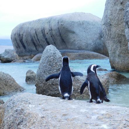 Happy Pinguine, Nikon COOLPIX L840