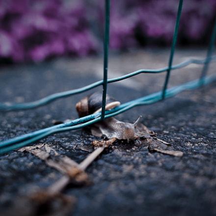 Stylized Snail Closeup, Nikon D750