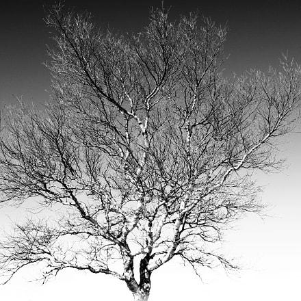 Birch tree f8, Canon EOS 100D, Sigma 17-70mm f/2.8-4 DC Macro OS HSM | C