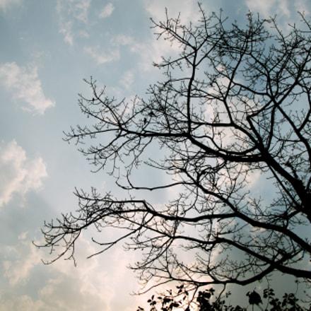 touching the sky, Canon POWERSHOT G9