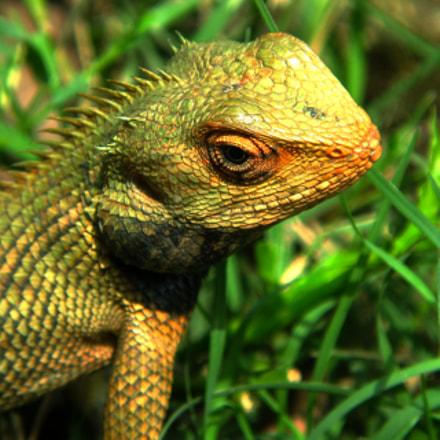 chameleon, Canon POWERSHOT G9
