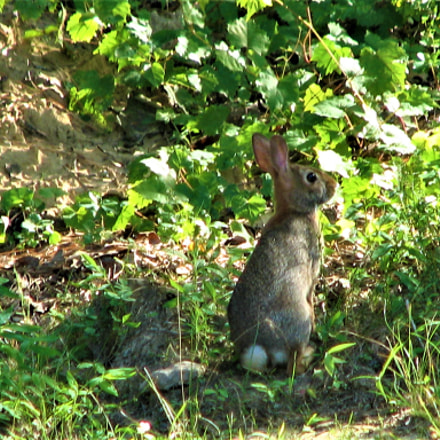 A small baby bunny, Canon POWERSHOT S2 IS