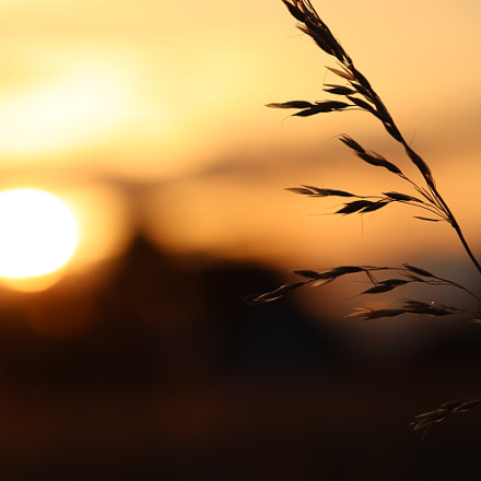 Fields of gold, Canon EOS M50