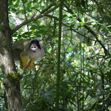 Monkey, Nikon D7000, AF-S DX VR Zoom-Nikkor 18-105mm f/3.5-5.6G ED