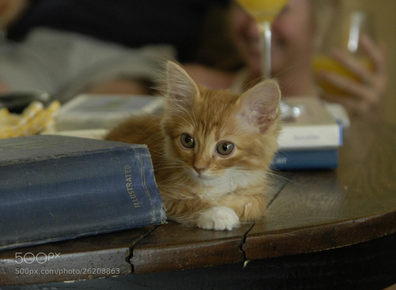 Photograph literary kitten by Terry Abbott on 500px