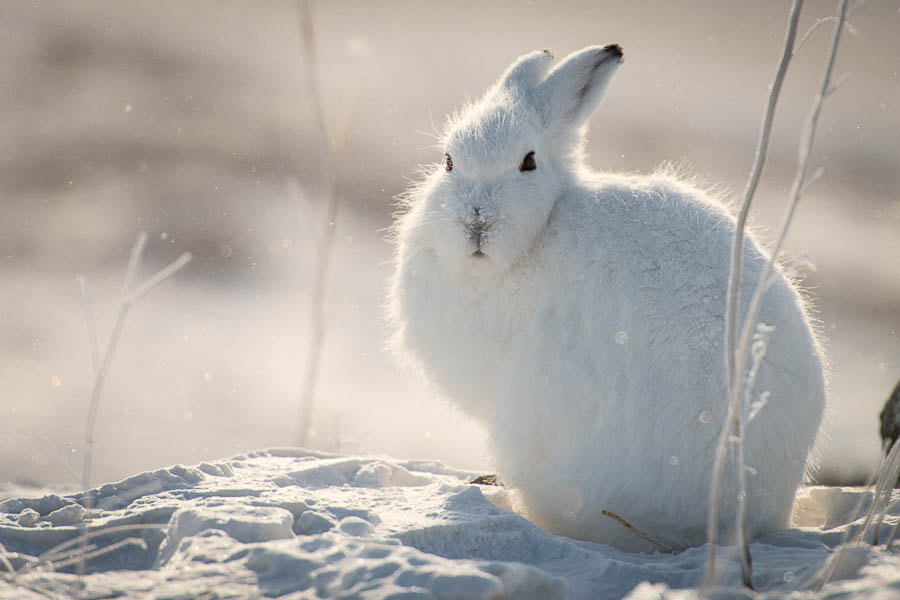 Photograph hare by Ivan Kislov on 500px