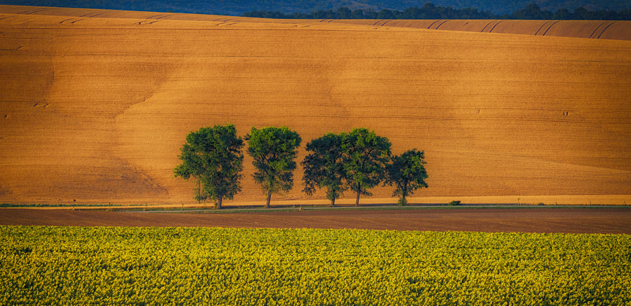 Trees by Andy58/András Schafer on 500px.com