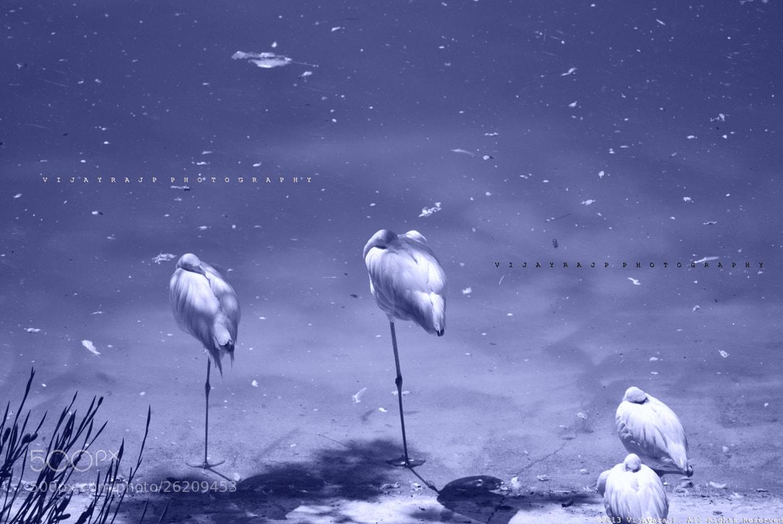 Photograph Balance in Nature by Vijayaraj Parameswaran on 500px