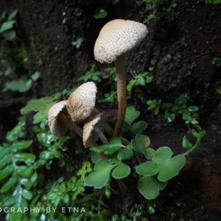 Wild mushroom, Nikon COOLPIX S3300