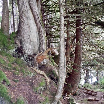 Matriarchal Tree, Nikon COOLPIX AW110