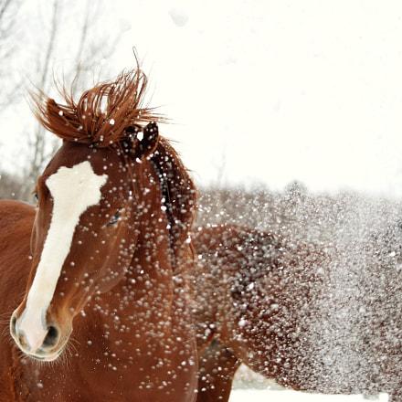 horse VS snow, Nikon D3300, AF-S DX VR Nikkor 55-300mm f/4.5-5.6G ED