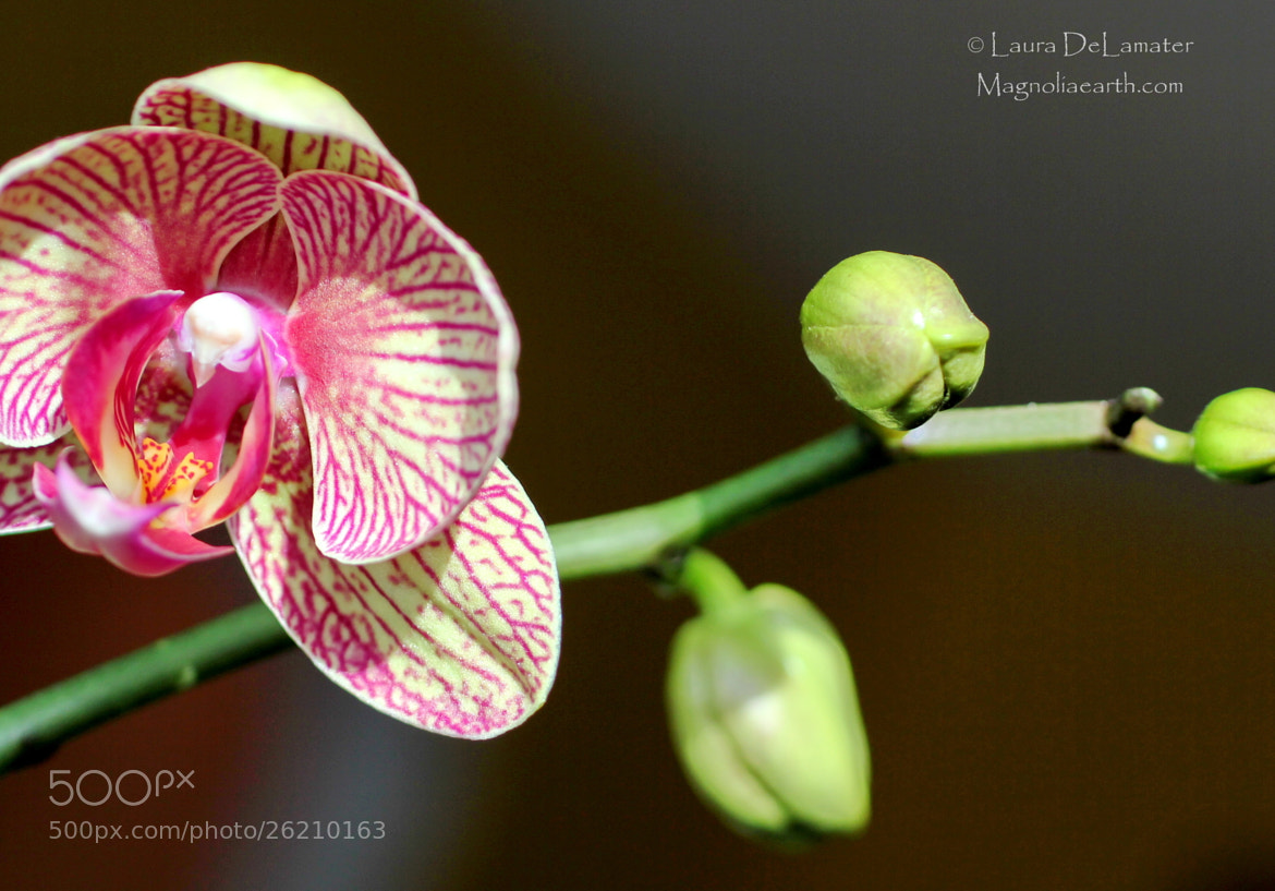 Photograph New Blooms by Laura DeLamater on 500px