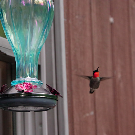 Another hummingbird attempt, RICOH PENTAX K-70, smc PENTAX-DA 18-135mm F3.5-5.6 ED AL [IF] DC WR