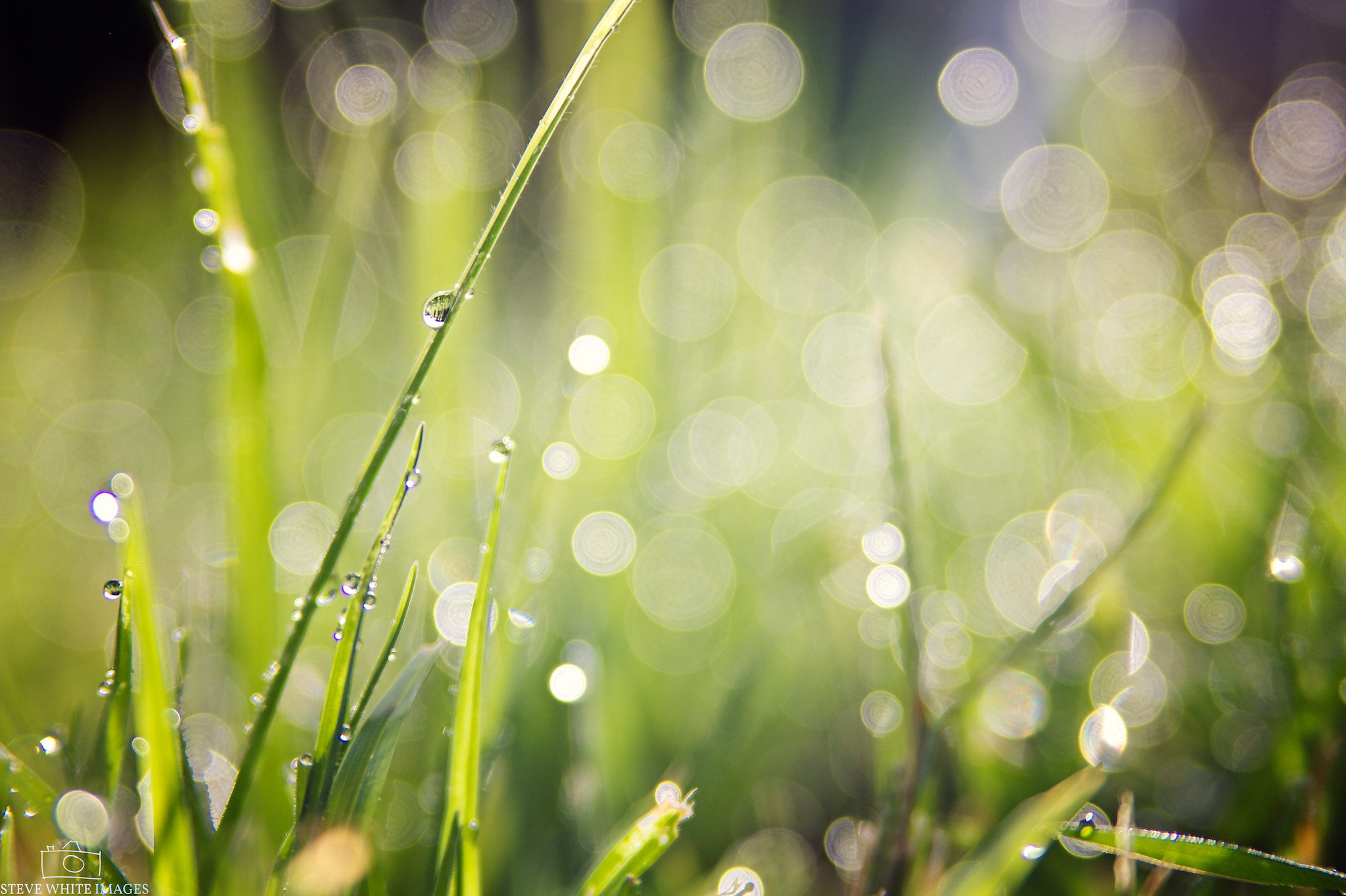 Photograph Dew Bokeh by Steve White on 500px