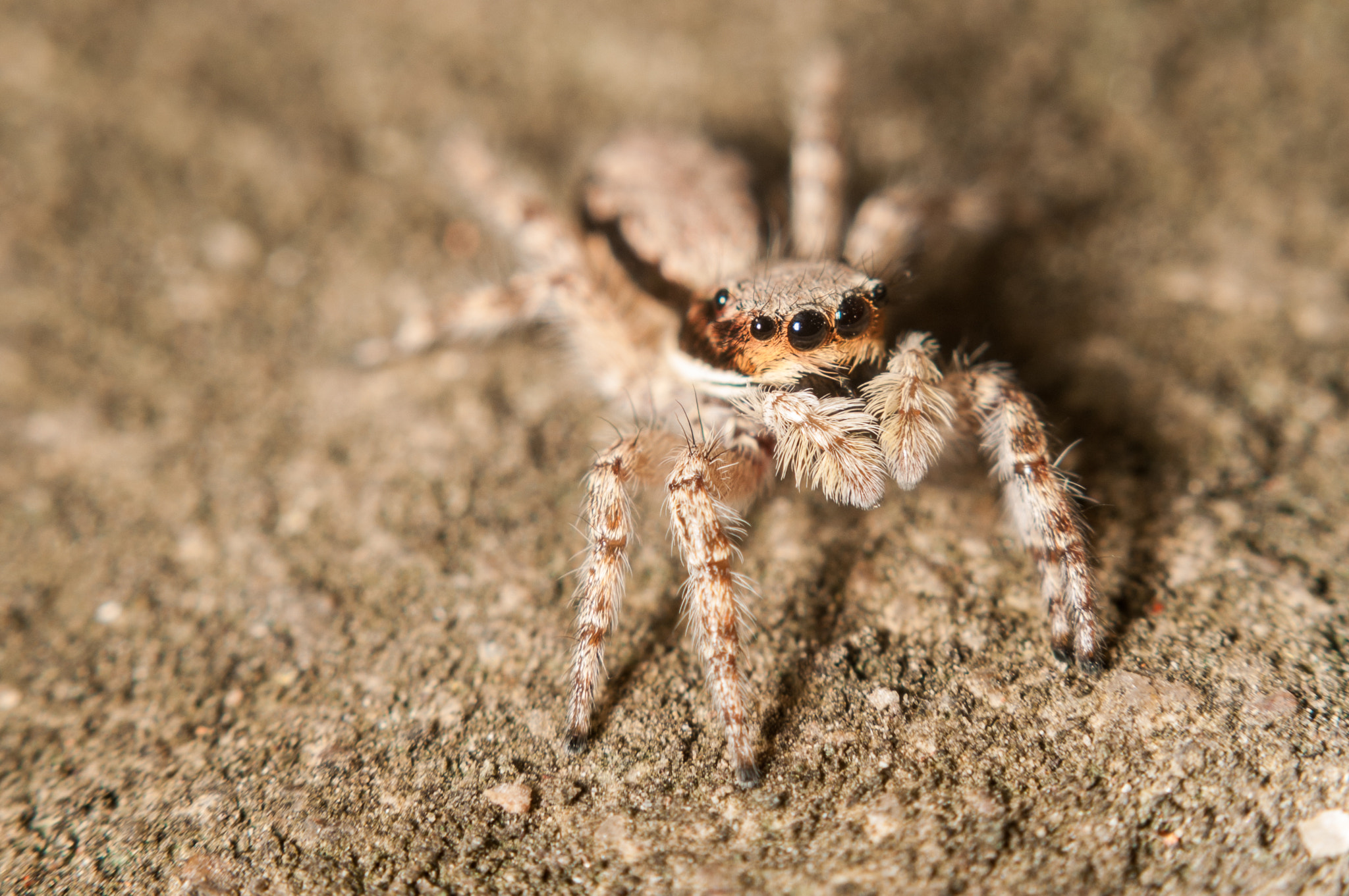 Photograph Spider portrait by Luan Nguyen on 500px