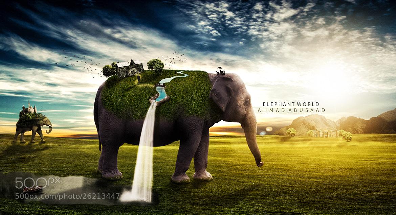 Photograph ELEPHANT WORLD by Ahmad Abusaad on 500px