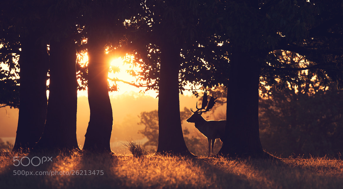 Photograph dawn by Mark Bridger on 500px