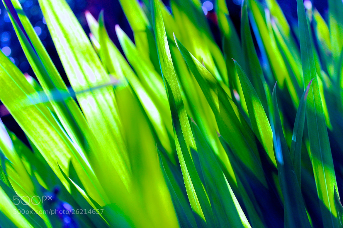 Photograph Growing by Stephanie Michelsen on 500px